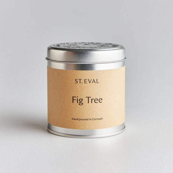 fig tin 1